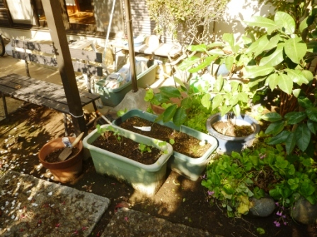 便利屋サービス お庭の片付け・物置内の整理整頓前の写真