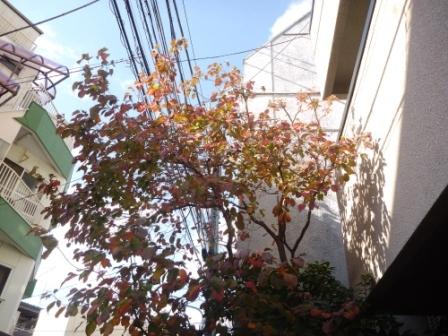 東京都大田区、お庭の手入れ・庭木の剪定作業中の写真