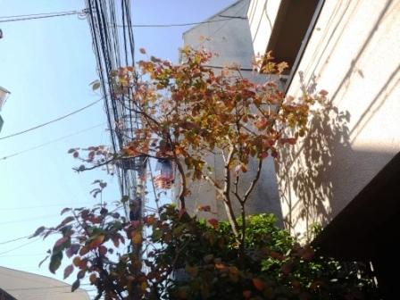 東京都世田谷区、お庭の手入れ・庭木の剪定完了写真