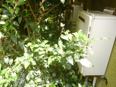 東京都目黒区、お庭の手入れ・草むしり・草刈りの写真
