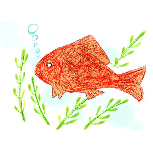 金魚/篠﨑 昌己